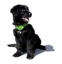 karma-the-wonder-dog